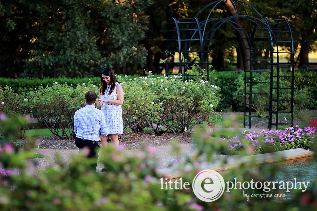 Colin Viteaux proposes to Allie Garcia Sept. 18, 2015 in the Fort Worth Botanical Gardens.